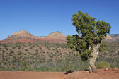 Scenic Sedona Arizona landscape — Photo
