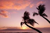 закат мауи — Стоковое фото