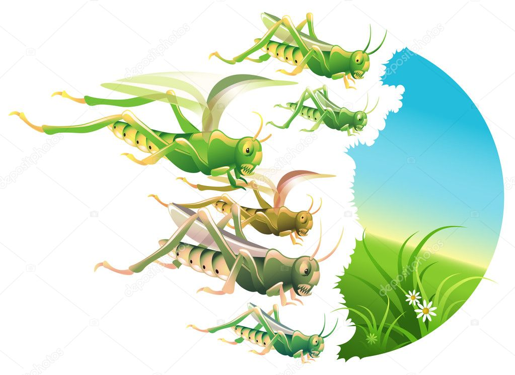 Illustration of a locust swarm eating everything in their path  Stock Vector #7530776