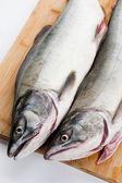 Rosa salmão — Foto Stock