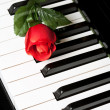 Piano Key and rose — Stock Photo #7396551