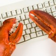 Lobster Claw and Computer Keyboard — Stock Photo #7450826