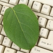 Computer Keyboard and leaf — Stok Fotoğraf #7454952