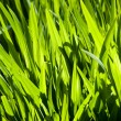 Green Grass — Stock Photo #7455293