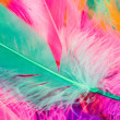 Colorful Feather — Stock Photo #7455375