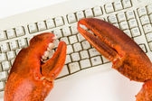 Lobster Claw and Computer Keyboard — Stock Photo