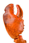 Lobster Claw — Stock Photo
