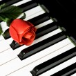Piano Key and rose — Stock Photo