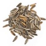 Sunflower Seed — Stock Photo