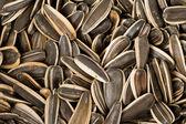 Nasiona słonecznika — Zdjęcie stockowe