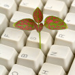 Computer Keyboard and sprout — Stock Photo