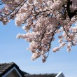Cherry blossom and roof — Stock Photo #7637919