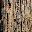 Wood Textured — Foto Stock