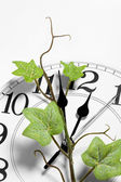 Clock and ivy — Stock Photo
