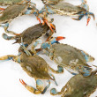 Blue Crab — Stock fotografie