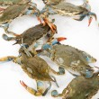 Stock Photo: Blue Crab