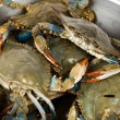 Blue Crab — Stock Photo