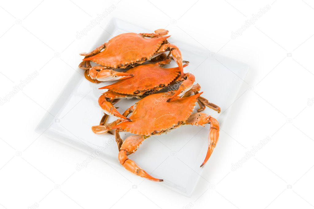 Blue Crab with white background  Stock Photo #7914327