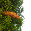 Stock Photo: Fir tree branches with cone.