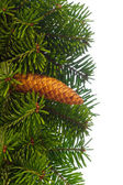 Fir tree branches with cone. — Stock Photo