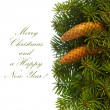 Stockfoto: Fir tree branches with cones.