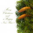 Fir tree branches with cones. - Stock Photo