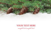 Fir tree branches with cones. — Stock fotografie