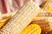 Nice juicy corn — Stockfoto