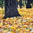 Stock Photo: Autumn forest foliage