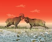 Montaña de las ovejas — Vector de stock