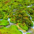 Green moss with water stream - Stock Photo