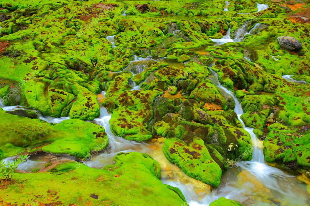 Green moss with water stream in japan — Stock Photo #6791390