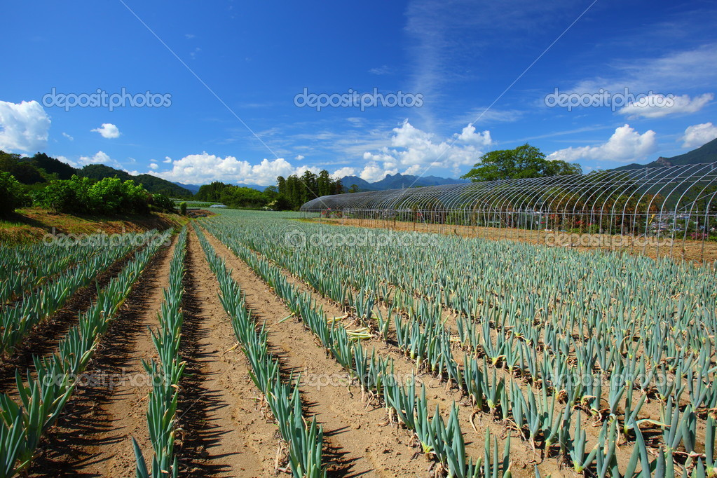 Green onion field and blue sky in japan — Lizenzfreies Foto #6821764