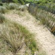 Sea oats and picket fence on fand dune — Stock Photo