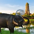 Elephant bathing in Ayutthaya — Stock Photo
