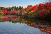 Japanese garden in Kyoto — Stock Photo