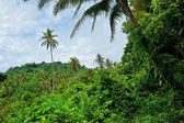 Tropical forest in Malaysia — Stock Photo