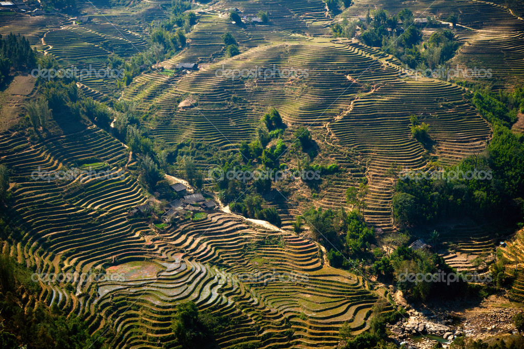 Rice filed terraces at Lao Chai, Sapa, Vietnam — Stock Photo #7735415
