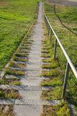 Green grass downstairs — Zdjęcie stockowe