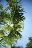 Tle liści palm i niebo — Zdjęcie stockowe