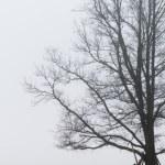 Tree in the mist — Stock Photo