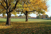 Fall season in a park, Portland OR. — Stock Photo