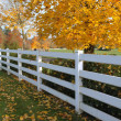 White fences. — Stockfoto