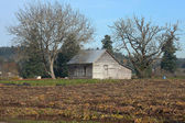 An old shack two trees & a farm field, rural Oregon. — Foto Stock