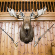 Moose head and guns on wall - Stock Photo