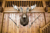 Moose head and guns on wall — Stock Photo