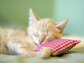 Sleeping Kitty — Stock Photo