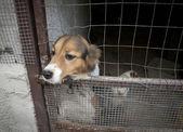 Cut dog behind bars — Stock Photo