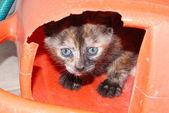 Kitten hiding — Stock Photo