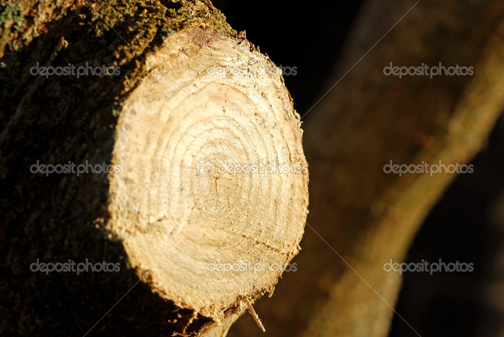 Trunk cut  Stock Photo #6825551